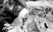 天价锦鲤用奶嘴吃饭(图)