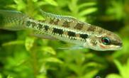 水温变动对观赏鱼的影响