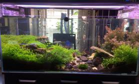 120cm草缸和90cm海缸完美结合水草缸为美景代言水草缸为自己喝彩水草缸为生活增彩水草缸陆续更新图片