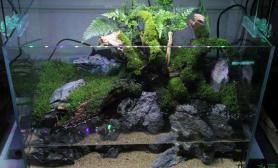 水草造景45苔藓、狼尾蕨小水陆