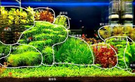 建缸一个多月了水草缸大家看看像荷兰景吗?欢迎评价沉木杜鹃根青龙石水草泥