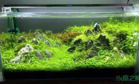 水族箱造景90cm的水草缸