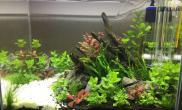 (持续记录中)开缸一周水草缸是否快爆藻了?要否下工具鱼虾水族箱