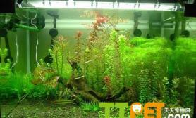 光照对水草的生长速度有何影响