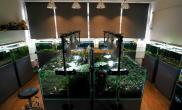 国内水族店水草缸造景香港尺寸设计