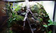 雨林水陆生态缸12