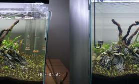 40方缸     5周左右变化历程鱼缸水族箱鱼缸水族箱鱼缸水族箱鱼缸水族箱鱼缸水族箱鱼缸水族箱