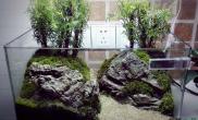 水草造景翻一个35厘米的小鱼缸