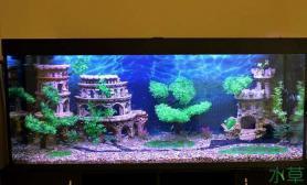 草缸里居然盖起来了城堡鱼缸水族箱鱼缸水族箱鱼缸水族箱