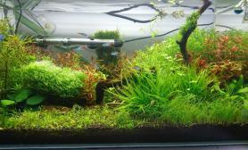 水草造景2个月的菜园子