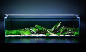 水草造景水草缸青龙石非标尺寸