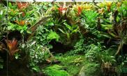 雨林沼泽缸