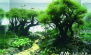 CAA 2015ADA世界水草造景大赛作品《晨曦与黄昏》