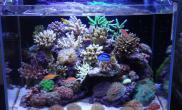 xlzxly的NANO缸海水珊瑚活体欣赏