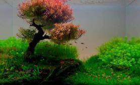 帮看看这个绑沉木的是什么草水草缸红色的