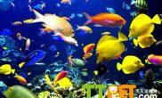 热带鱼包括哪些常见种类