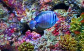 养鱼菜鸟必学 热带鱼饲养指南