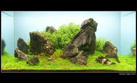 水草缸造景沉木水草泥化妆砂青龙石90CM尺寸设计42