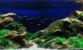 顶级高手造景图水草缸真是让人除了惊叹还是惊叹鱼缸水族箱