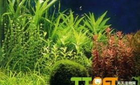 如何自制水草液肥