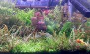 水草造景我的1图片2草缸
