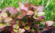 新手报到水草缸自己的菜园子水草缸都是垃圾草