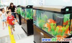 国内首届热带观赏鱼科普展开幕(图)