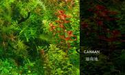《迦南地》完整版——向你讲述水草背后的感人故事鱼缸水族箱