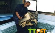 如何用手抓鳄鱼龟