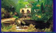 鱼缸造景有人会做小房子水草造景吗?