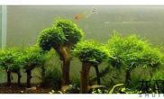 一图流:小树林成景照