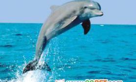 海豚原来智商不如金鱼(图)