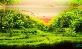 [交流]关于水草造景的心得体会