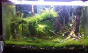 我家水藻缸修建了下沉木杜鹃根青龙石水草泥沉木杜鹃根青龙石水草泥沉木杜鹃根青龙石水草泥沉木杜鹃根青龙石水草泥