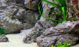 请问大神水草缸这是什么底砂?