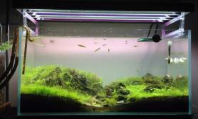 翻缸后的骨架鱼缸水族箱