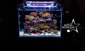 养水的重要性珊瑚混养缸新手通往天堂的捷径