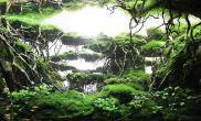CAA 2015ADA世界水草造景大赛铜赏——《奇妙的世界》