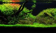 1米2草缸造景——绿野仙踪