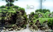 用小碎石搭建成的石景缸水草缸赞鱼缸水族箱