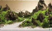 1图片2米松皮石景开缸