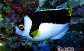 为什么饲养观赏鱼要在水中加盐