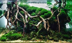 水草缸造景沉木水草泥化妆砂青龙石120CM尺寸设计59