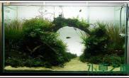 水草造景作品:水草造景(90cm)-73