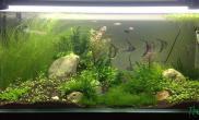 【水草造景篇】草和鱼