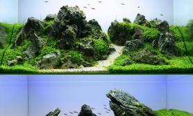 鱼缸水族箱水草缸造景获奖ADA作品图片展示收藏