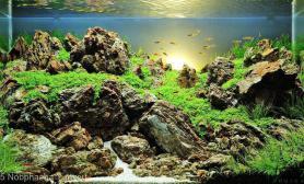 60x35x35cm石景缸水草缸请大家欣赏鱼缸水族箱