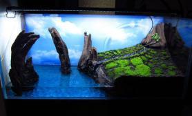 水陆缸——独创的海岛风情