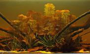 造景之路水草缸造景原生态鱼缸11