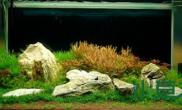草缸里变化惊人鱼缸水族箱尤其是红色水草的变化水草缸真心喜欢这缸里的一切